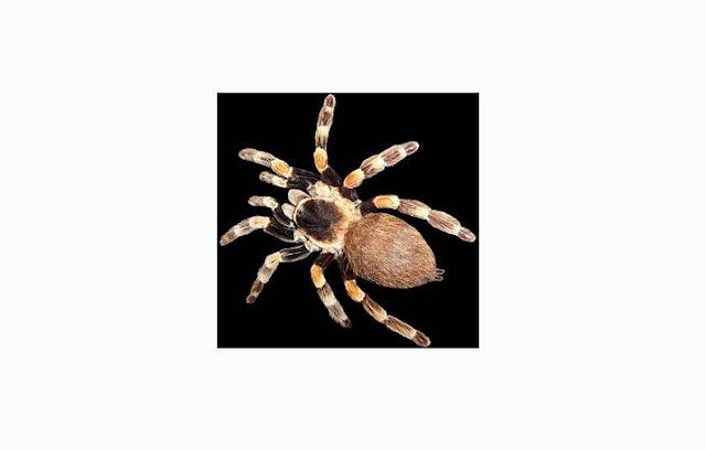 Pengertian, Ciri, Struktur tubuh dan Klasifikas Arthropoda