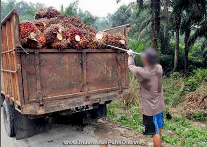 resilient palm oil industry