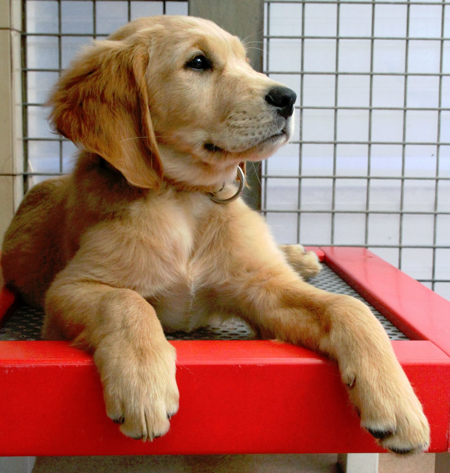 photos de tous les chiens du monde. Black Bedroom Furniture Sets. Home Design Ideas