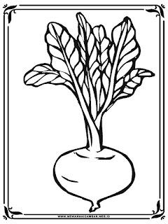 Gambar Mewarnai Gambar Lobak Sayur Sketsa Sayuran Sapawarga