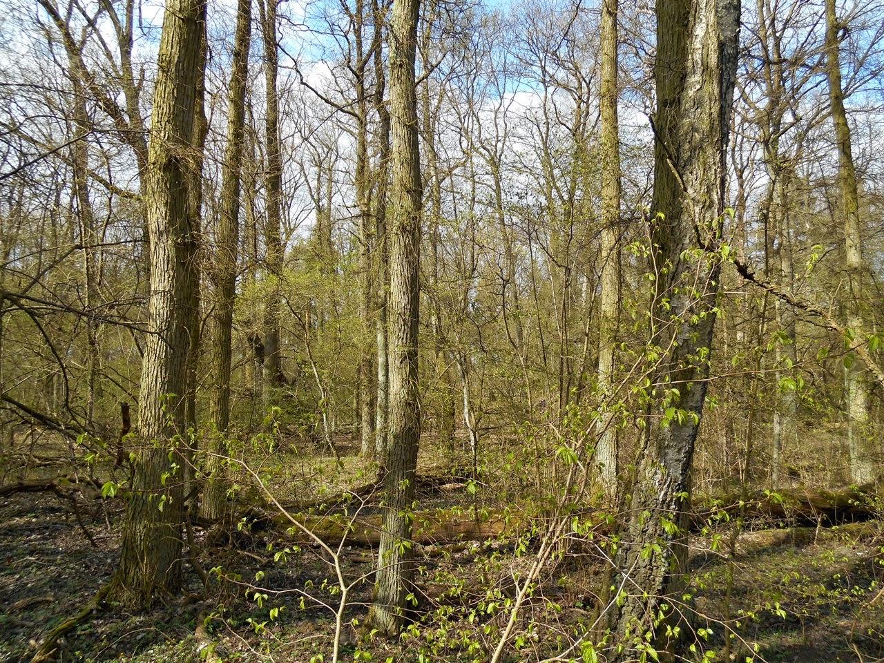 drzewa, Morasko, rezerwat, zieleń