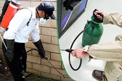 شركة مكافحة حشرات بجدة - ومكافحة النمل الابيض والبق والفئران والصراصير