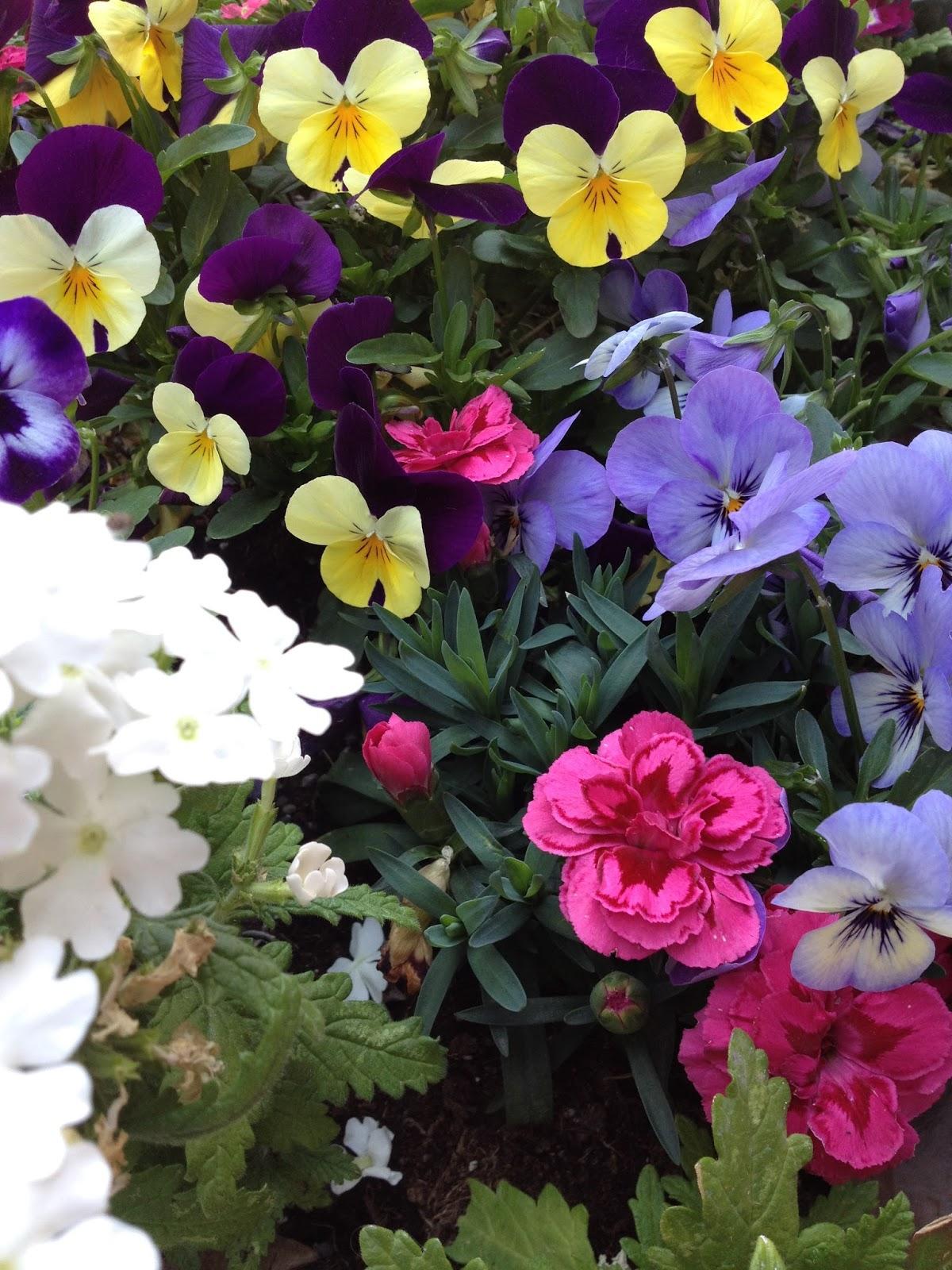 Atmosfera di casa fiori e profumi for Casa francese di abiti e profumi