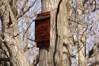 new bat house