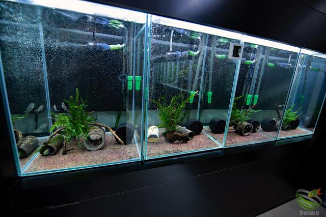 African cichlid tanks