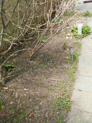 Toronto Summerhill spring garden clean up after by Paul Jung Gardening Services
