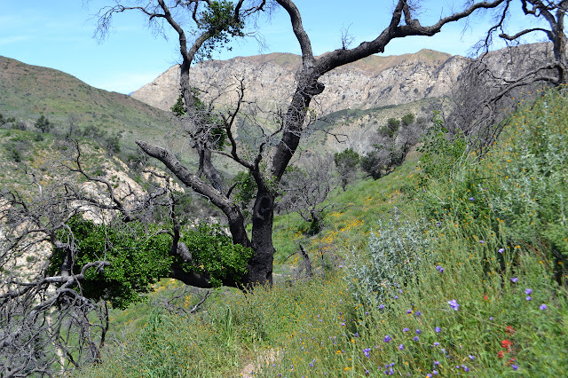many different flowers on the canyon side