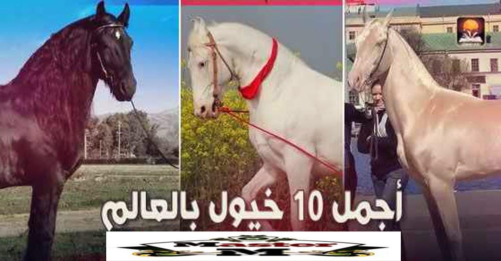 تعرف على أجمل 10 خيول فى العالم بالصور والفديو على ماستر زوووووووو
