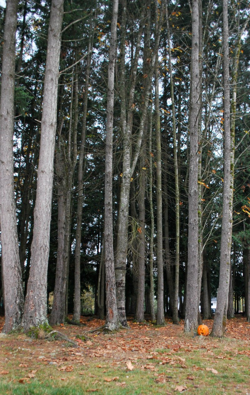 a fall story to read and retell - in the forest - rubber boots and