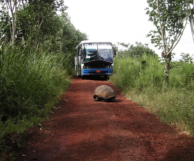 tortoise-18209_960_720.jpg