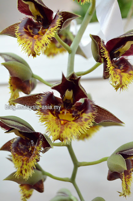 Orchid Photo Royal Floria