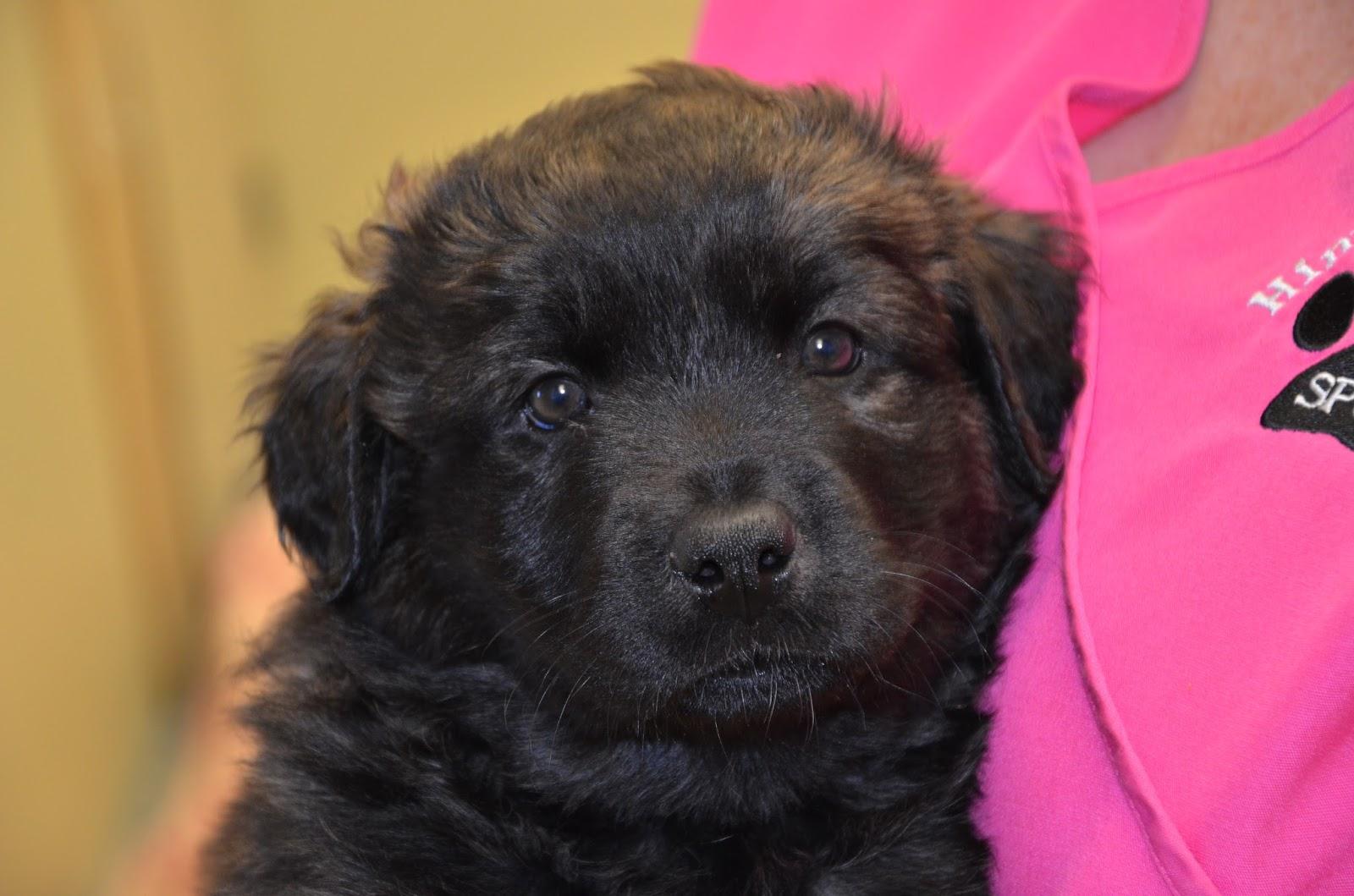 Hinton Spca Dogs For Adoption