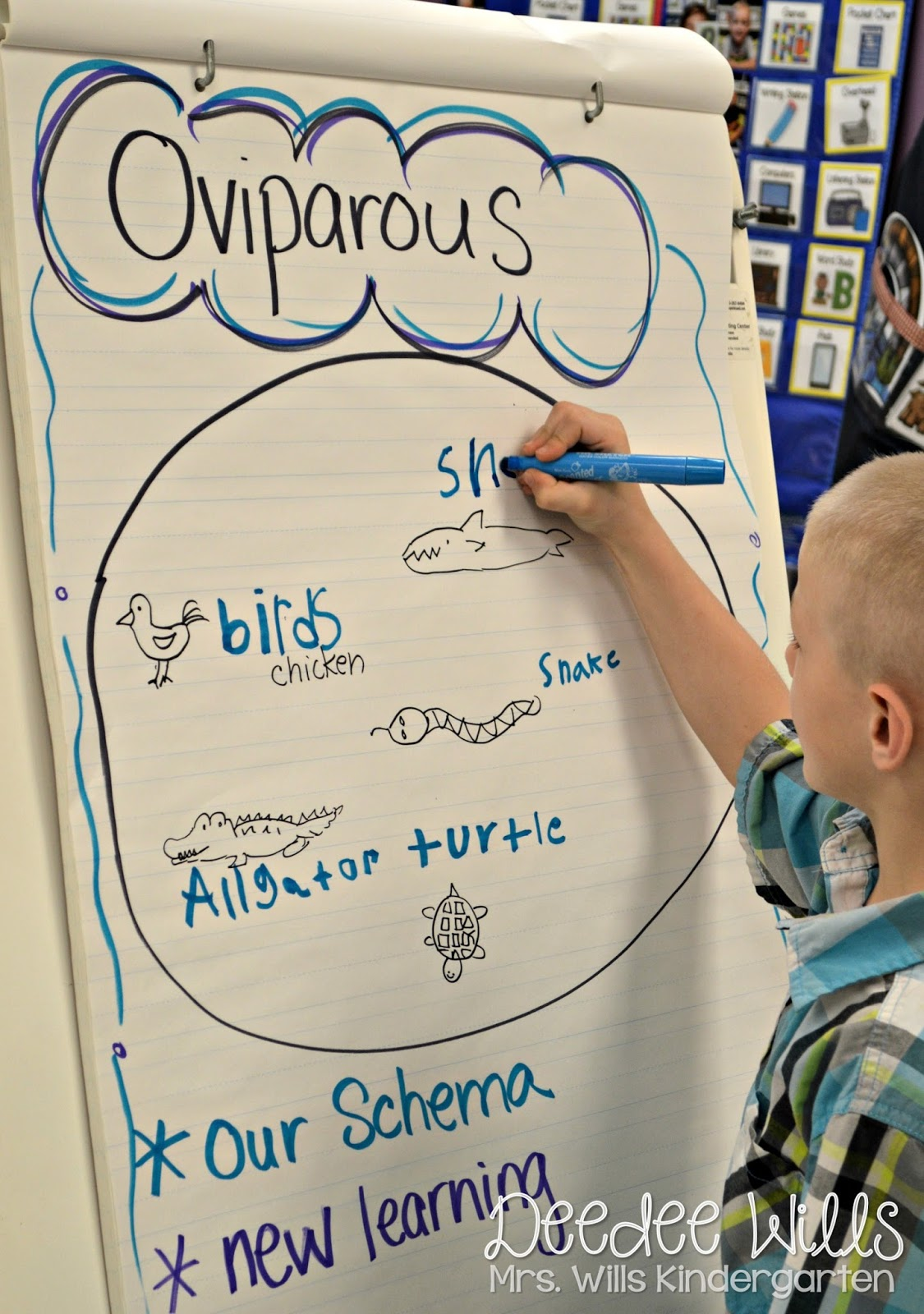 Image of: Learning We Have Always Loved Learning About Oviparous And Viviparous Animals Usually Cover These Lessons Amazoncom Oviparous Animals Lesson Plans