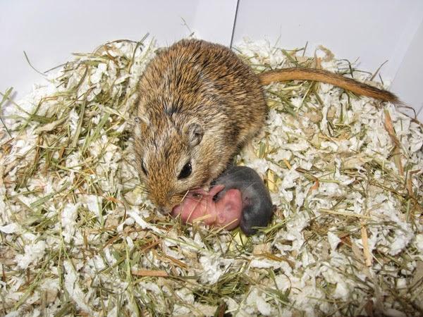 Animales incre bles insectos o curiosidades afines por for Pececillo nuevo de cualquier especie