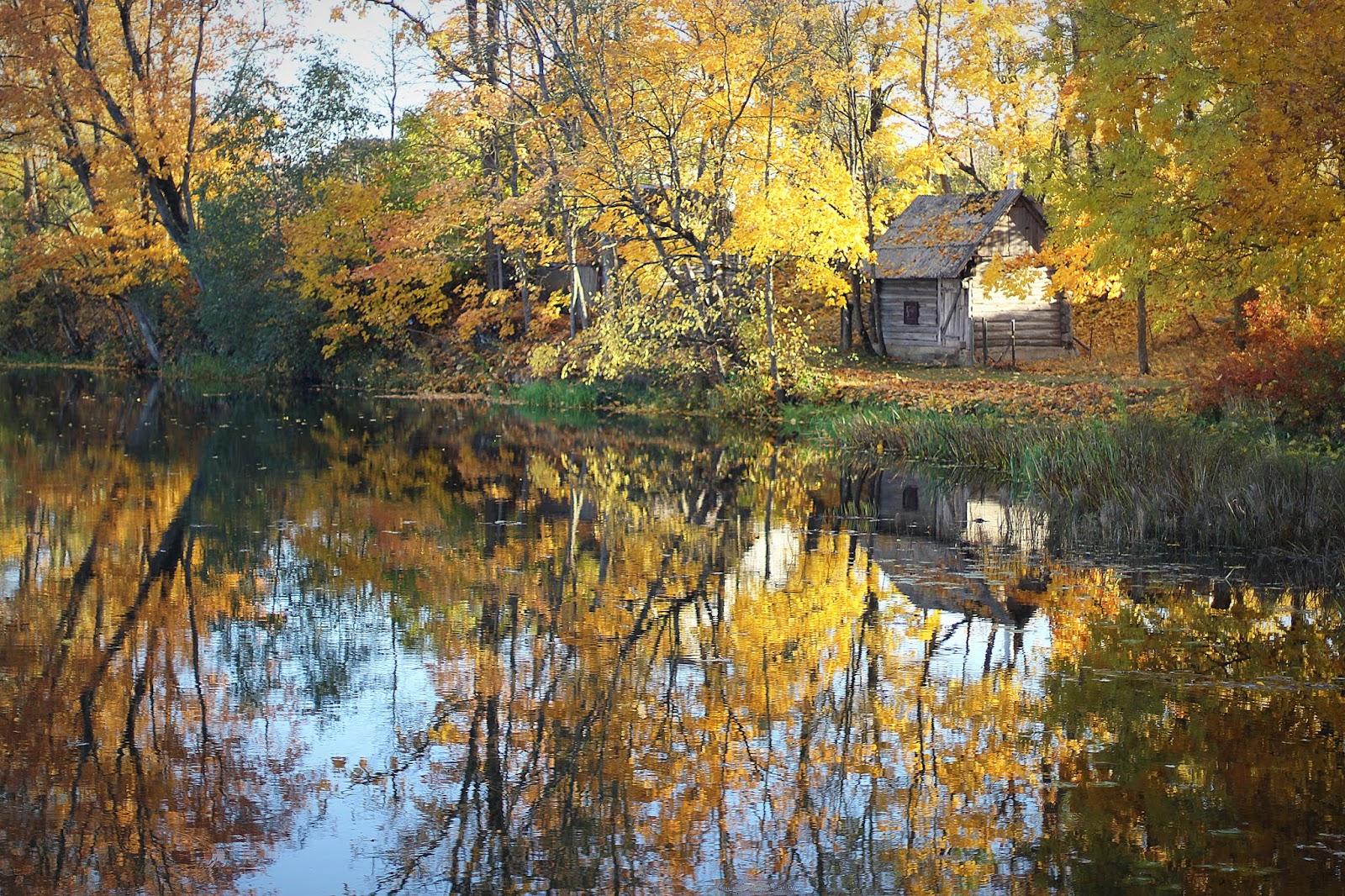 Обои тропа, грусть, Девочка, ноябрь, осень, настроение, серость. Природа foto 19
