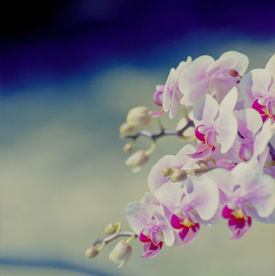 صور ورود 2018 جميلة مجموعة صور ازهار ورد رومانسية للتهنئة فيس بوك ورد الحب للمرتبطين الصداقة