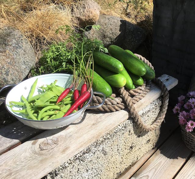 Stadig nye grønnsaker fra drivhus og pallekarmer