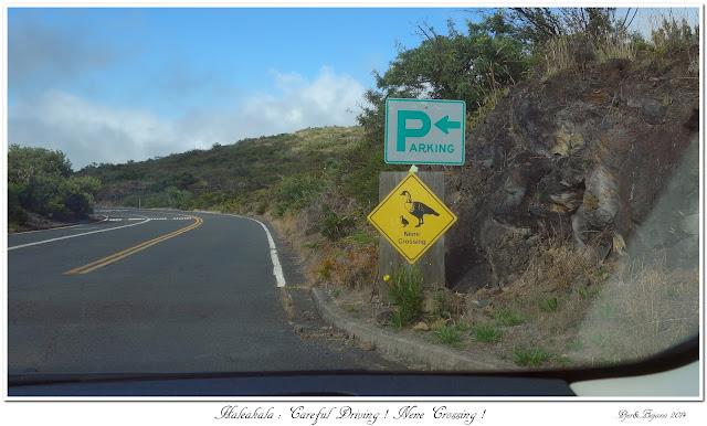 Haleakala: Careful Driving! Nene Crossing!
