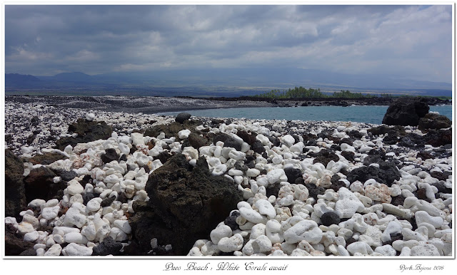 Pueo Beach: White Corals await