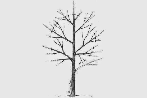 mon arbre le de vivre le douaire quand comment tailler les arbres fruitiers au verger. Black Bedroom Furniture Sets. Home Design Ideas