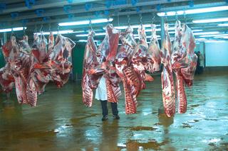 جمعية وطنية في مجال تربية المواشي و انتاج اللحوم