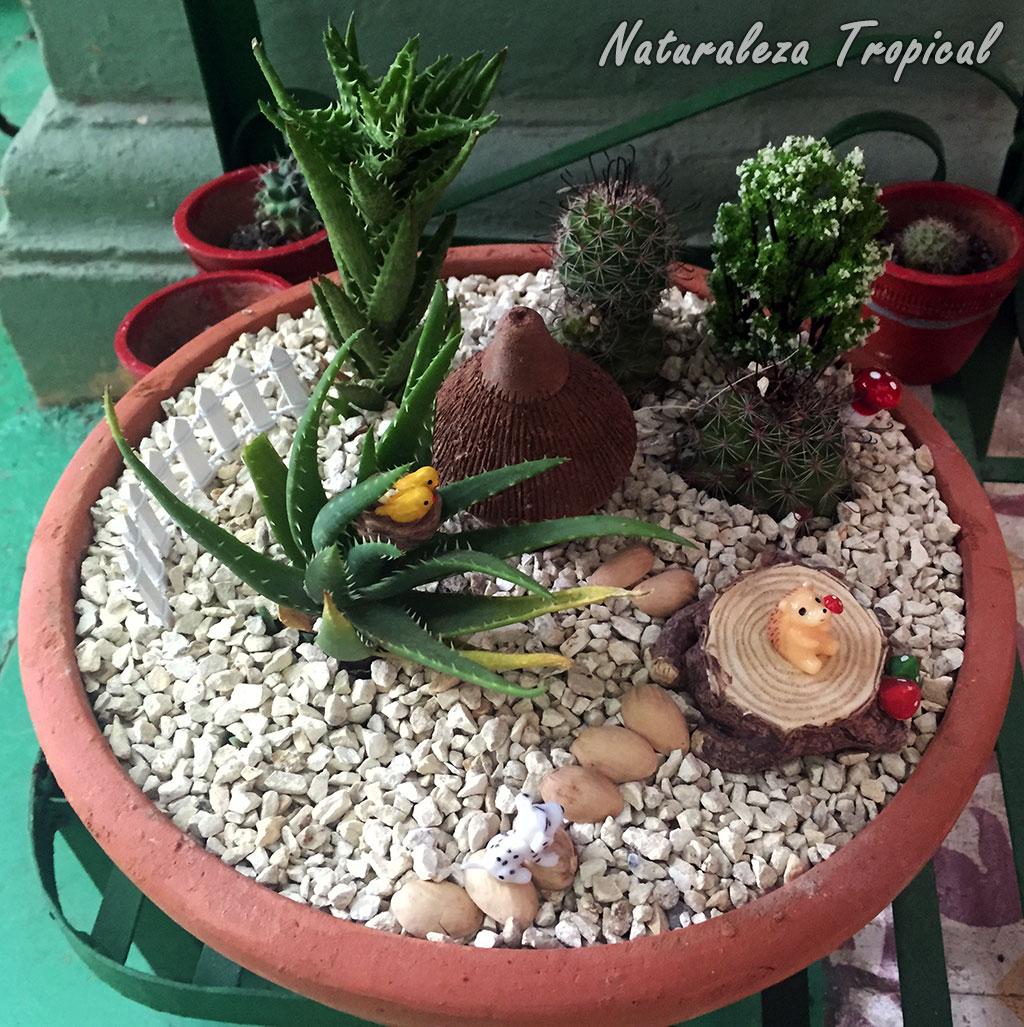 Naturaleza tropical galer a de arreglos con plantas for Varias plantas en una maceta