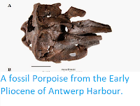 http://sciencythoughts.blogspot.co.uk/2015/01/a-fossil-porpoise-from-early-pliocene.html
