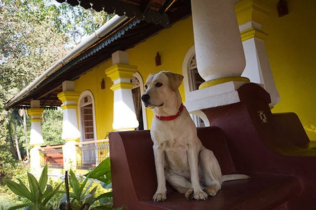 If you are a Pet Lover, You will Love these Pet Resorts near Mumbai