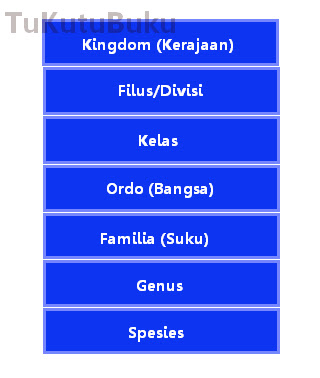 klasifikasi makhluk hidup 5 kingdom,ppt, pdf 6 kingdom, kelas 7, powerpoint menurut whittaker, monera, beserta ciri-cirinya, dan gambarnya