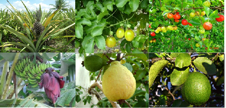 #Fruticultura, Cultivo de Plantas Frutíferas