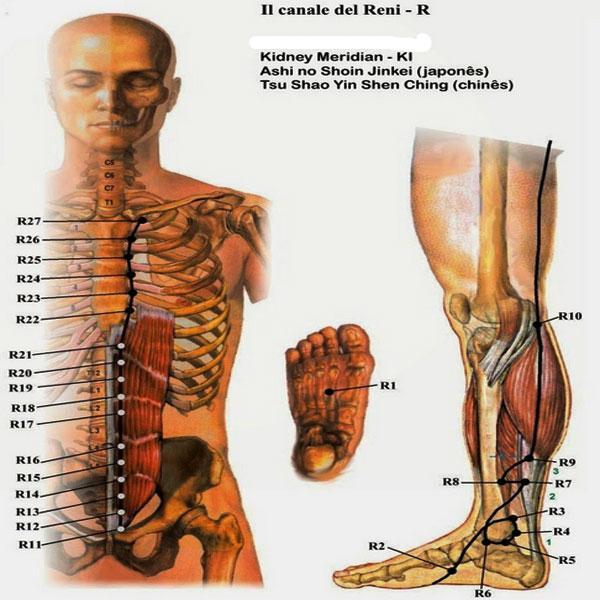 Kidney Meridian, Meridian Ginjal, Manfaat Meridian Ginjal, Titik Meridian Ginjal