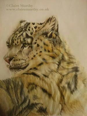 Wildlife Artist : wild cat art snow leopard