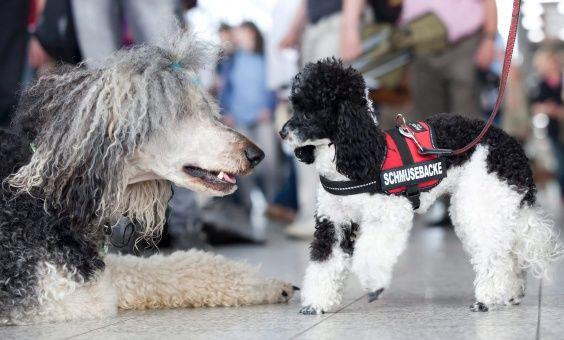 En 10 años los perros podrán hablar con los humanos