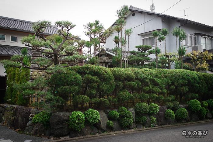haies taillées, quartier Ryoan-ji, Kyoto