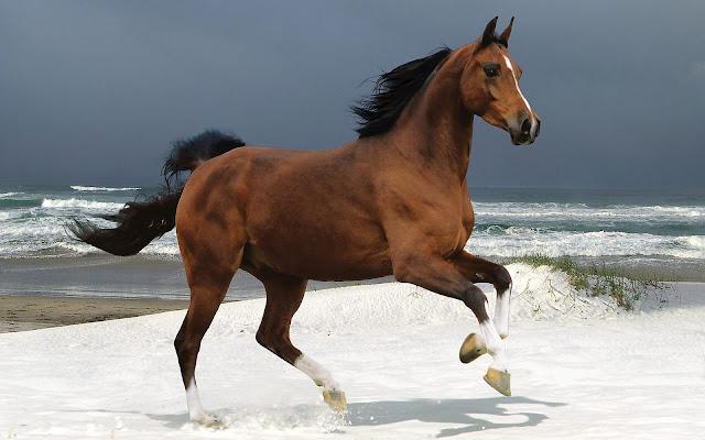 Bruin paard in de sneeuw op het strand