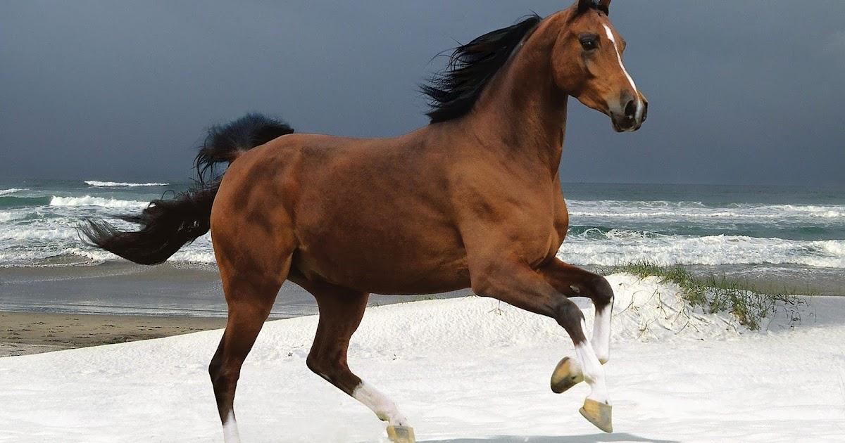 Bruin Paard In De Sneeuw Bij De Zee