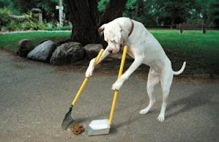 Perro recogiendo su caca
