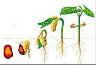 Faktor-Faktor Yang Mempengaruhi Pertumbuhan dan Perkembangan Tanaman