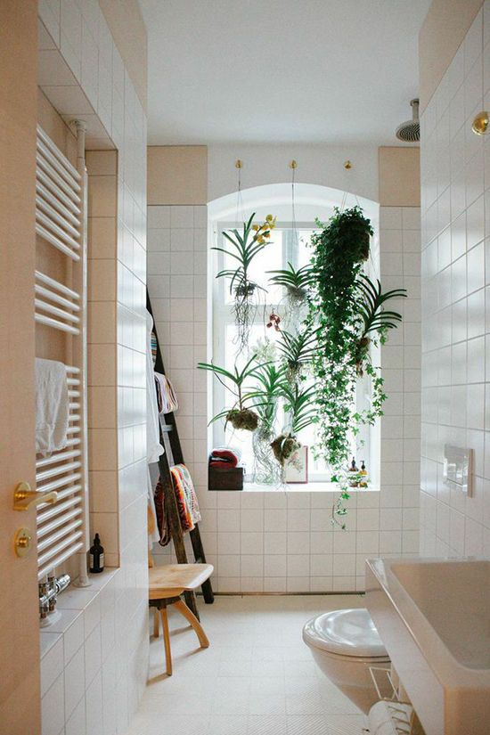 Best Plants for The Bathroom- design addict mom