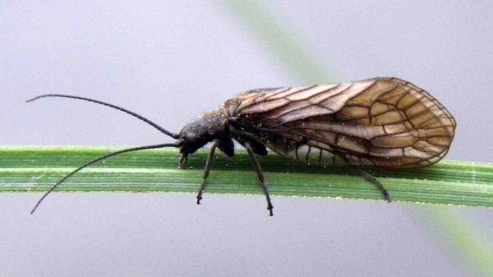 Mengapa Gigitan Serangga Dapat Berbahaya?