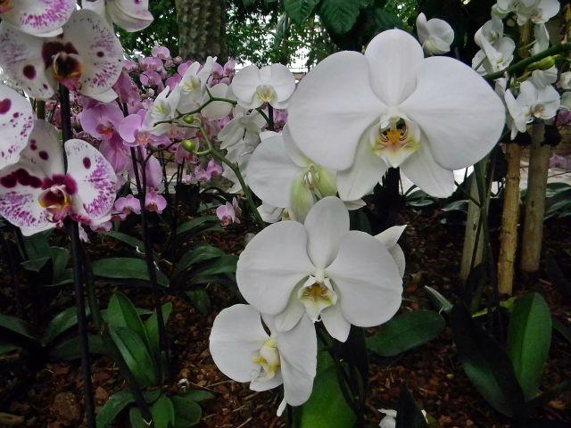 kwiaty, tropiki, palmiarnia, Zielona Góra