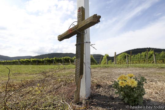 A cross made from batons, barbed wire and No 8 wire from the broken fence, tied to a road sign, near where a motorcyclist died on Napier-Taupo Rd, SH5, on Sunday morning. photograph