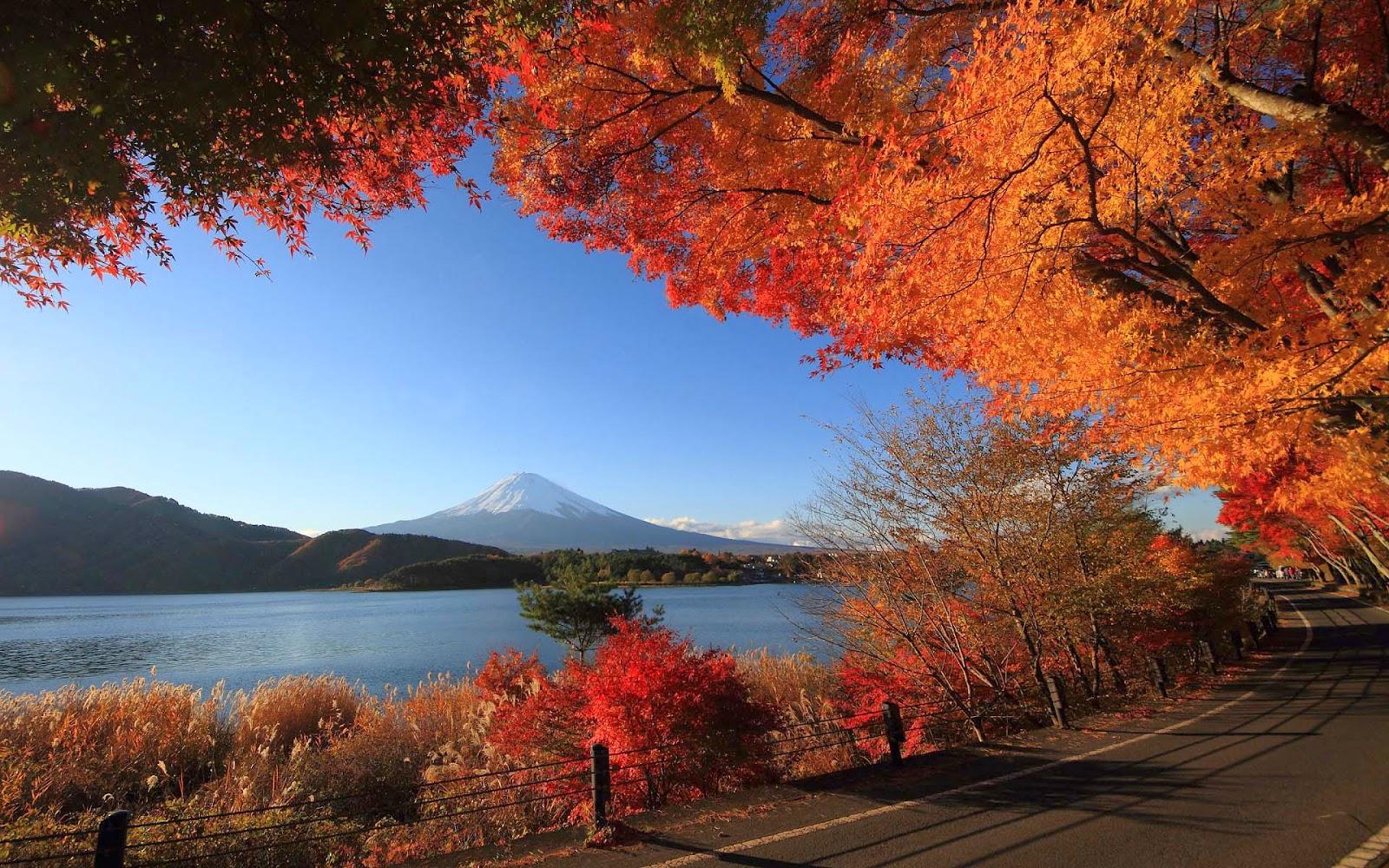 Foto herfst bomen weg meer