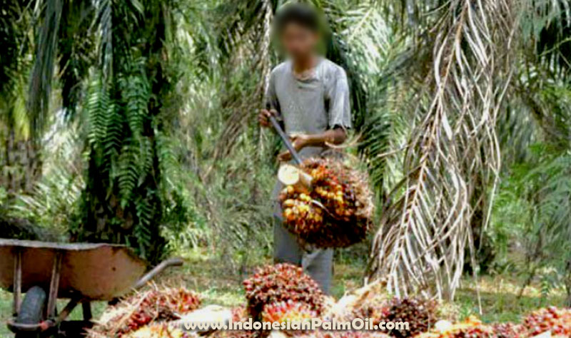 indonesia moratorium oil palm plantations