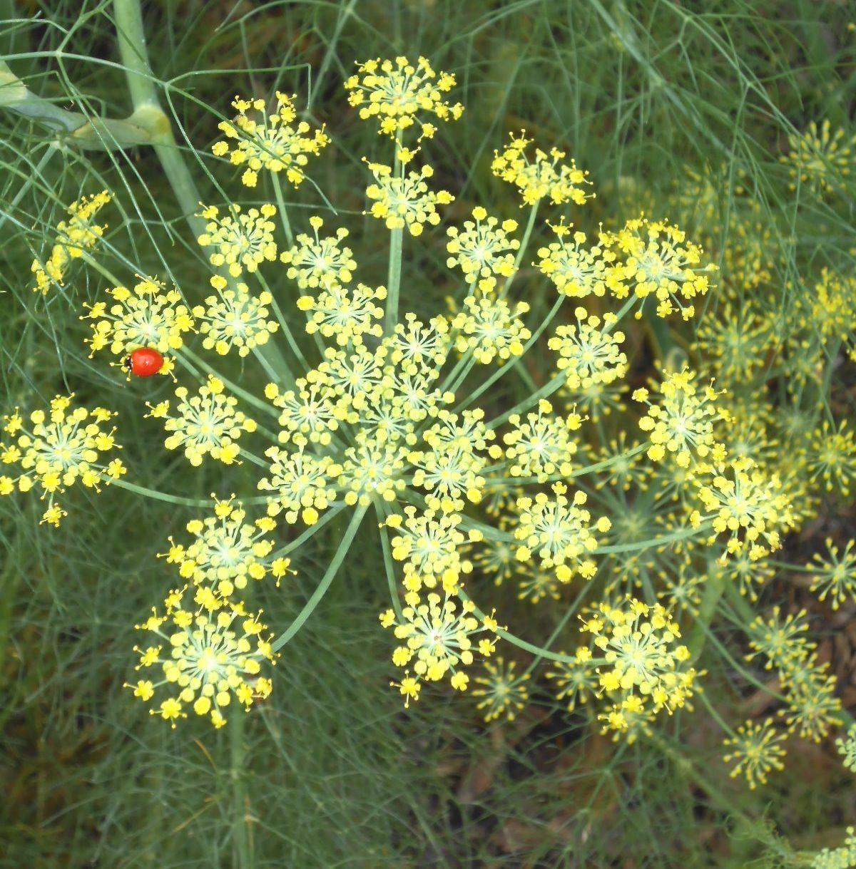Central Texas Horticulture: Saturday Summer Seminars at ...