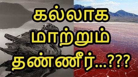 Lake That Turns Animals to Stone?