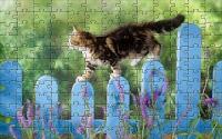 Kitten balance