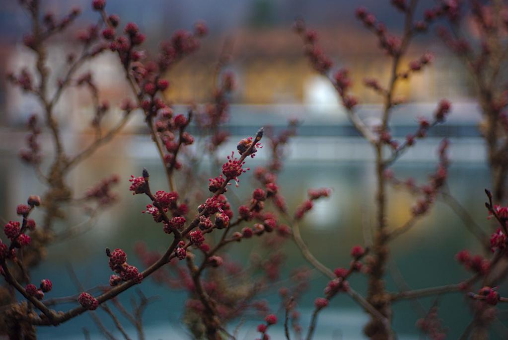 "#272 Novar-Anastigmat f3.5 45mm - Blüten in Heildelberg - Aus Gerhards ""Care"" Paket"