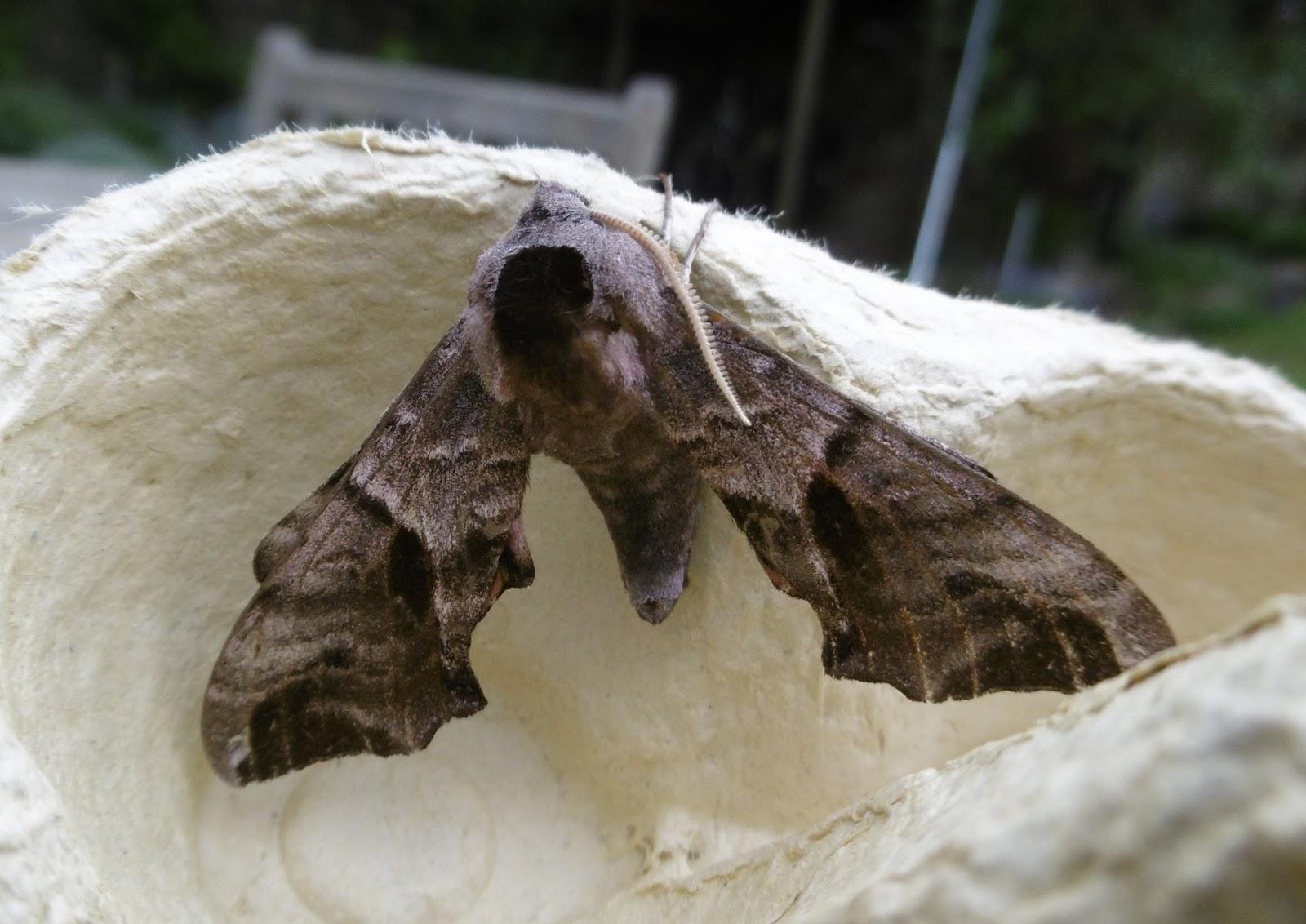 Small Moths In Bedroom Martins Moths 2017