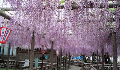 Nagafuji de Kumano